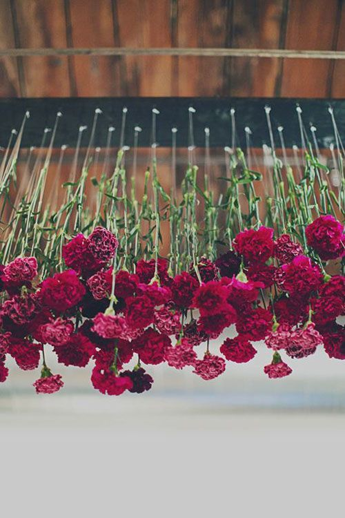 Cheap wedding decor idea! Carnations are an easy flower to experiment with. In this example, upside down flowers from plexi glass, suspended from the ceiling