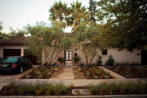 Olive Trees In Front Yard Home Ideas Outdoor