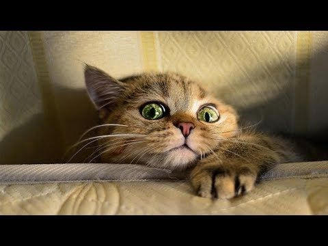 Youtube Cat Memes Funny Cats Cats