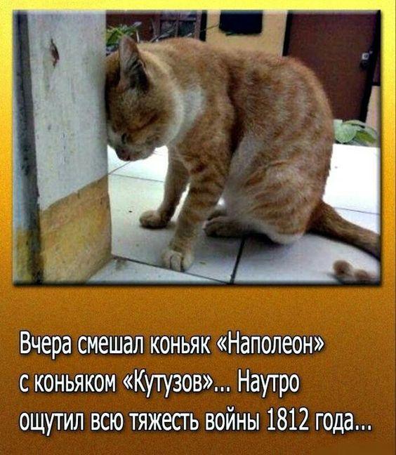 #шуткаюмора #котик Требования к ввозу животных в Болгарию и ЕС