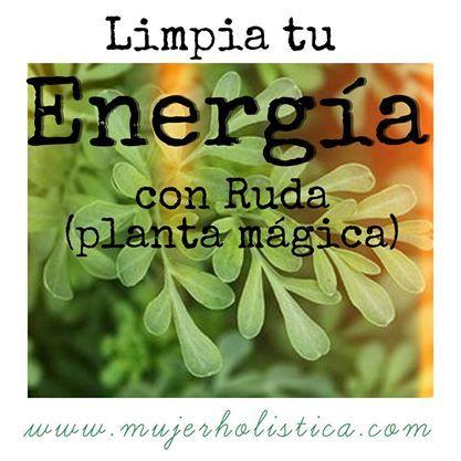 Hierba mágica para limpiar tus energías! La Ruda: no sólo nos protege y nos trae…