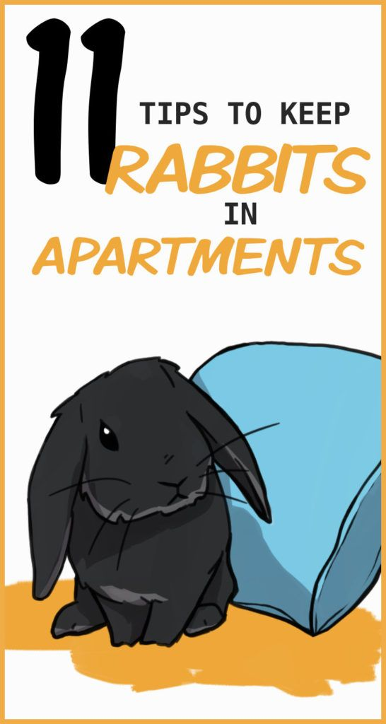 11 Tips To Keep Rabbits In A Small Apartment In 2020 Pet Bunny Rabbits Bunny Cages Pet Bunny