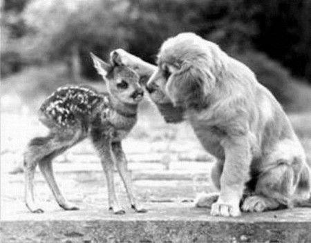 Puppy meets Bambi.