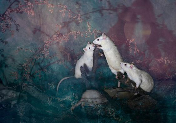 Animals Rescued From Labs Become Magic Models In Alice-In-Wonderland Photoshoot.