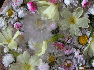 Mami Made It: Frozen Flowers - Gefrorene Blüten