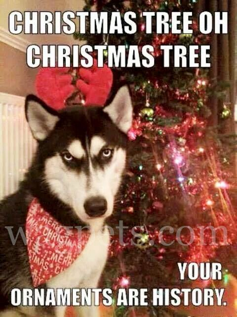 Oh Christmas Tree Oh Christmas Tree Your Ornaments Are History Dog Quotes Funny Dog Christmas Pictures Funny Husky Meme