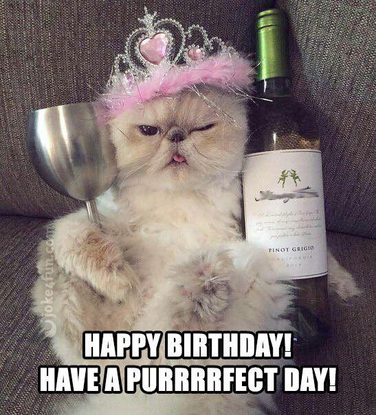 Happy Birthday Princess Happy Birthday Funny Cats Cat Birthday Memes Happy Birthday Cat