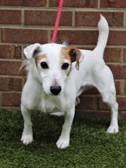 , Small Dog Breeds Rescue Tn, Carles Pen, Carles Pen