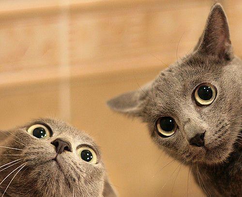 Weird, cute cats