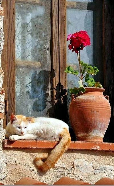 Gatos na janela. Greece