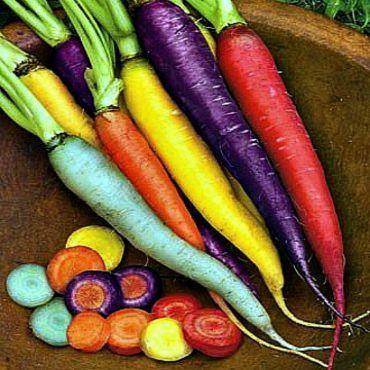 Rainbow Carrot Mix Seven Crazy Colors