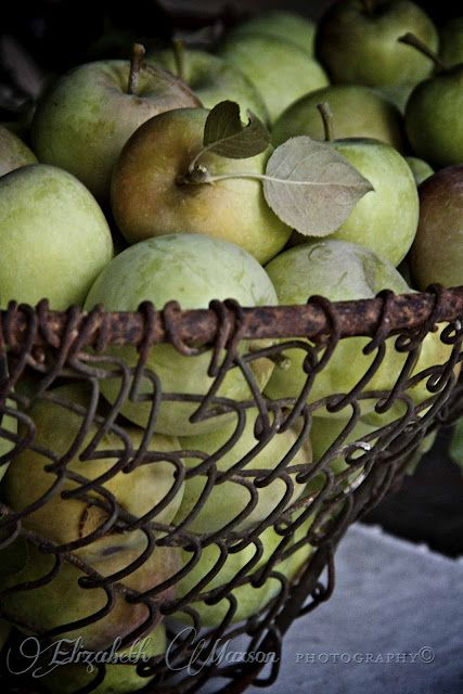 green apples in old wire potato basket