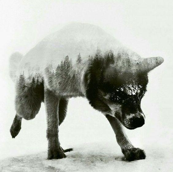雪にまみれるおしゃれでかっこいい犬の壁紙