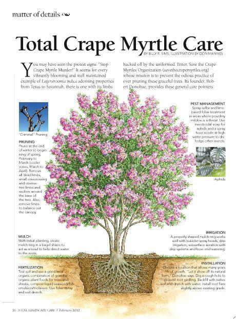 Total Crape Myrtle Care -