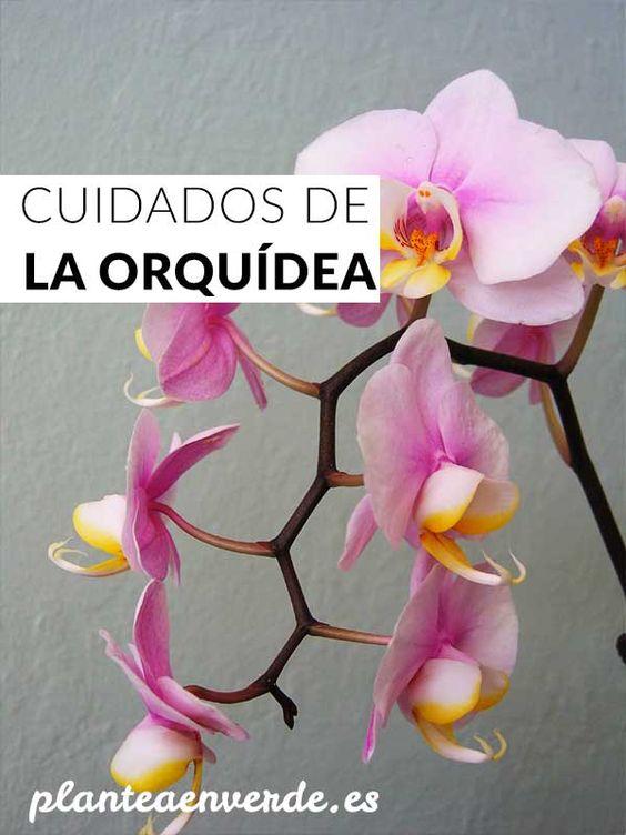 cuidados de la orquidea junglas de interior pinterest