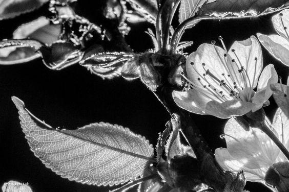 Blühende Bäume | raegi