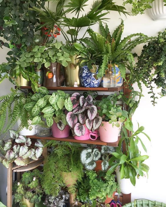 shelves with overflowing plants #gardenIdeas #garden #gardening #plants #homeDecor #indoor #shelves