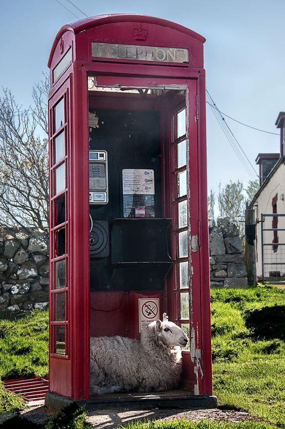 "wanderthewood: ""I'll be calling Ewe"" - Clashnessie, Assynt, Scotland by RiserDog"