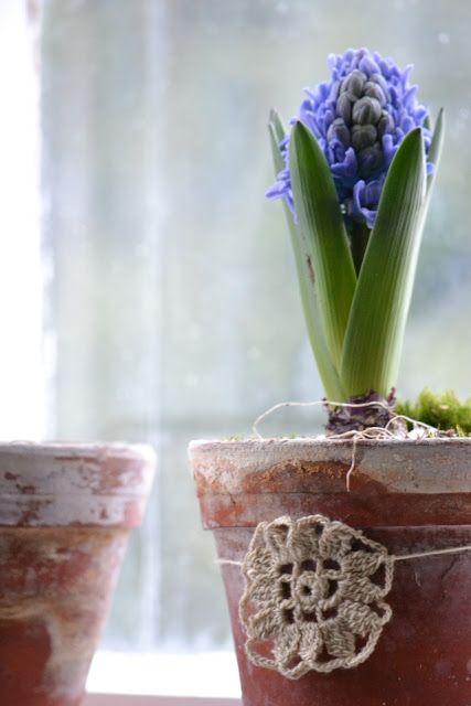 maceta con jacinto