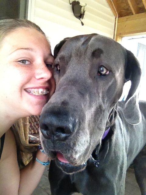 Great Dane Selfies Crazy Dog