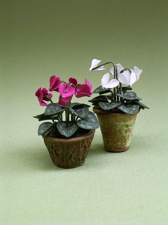 Cyclamen, flowering houseplant