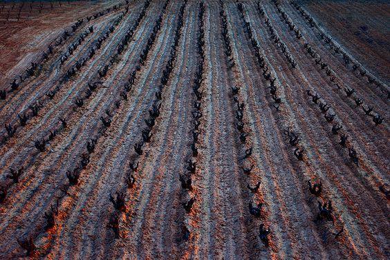 Las viñas, nuestra razon se ser.... #rioja #vino #bodegasmurilloviteri #winelovers