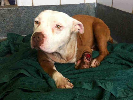 Located San Antonio Acs Shelter Petharbor Com Animal