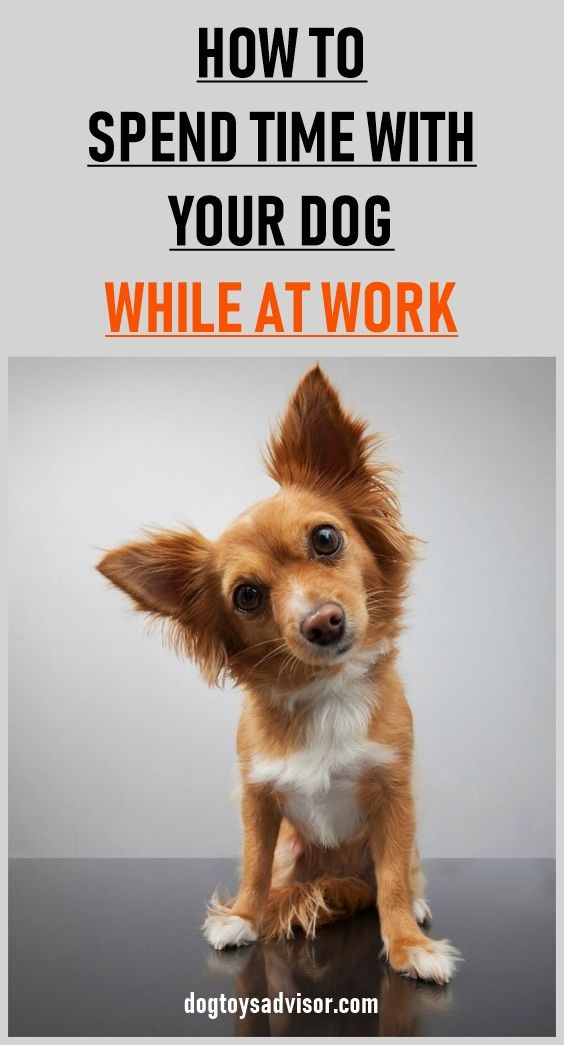 Do You Want To See Talk And Interact With Your Dog While At Work Here S How You Can Spend Time With Your Dog When With Images Aggressive Dog Puppy Training