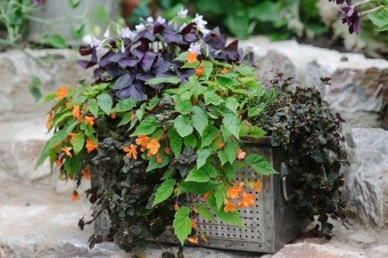 Container plants for shade