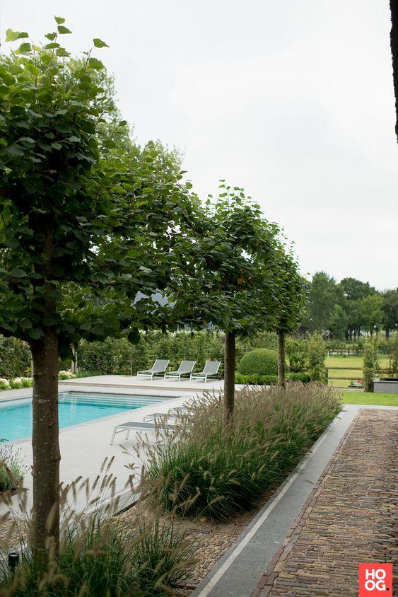 Strakke tuin met zwembad en rechte lijnen