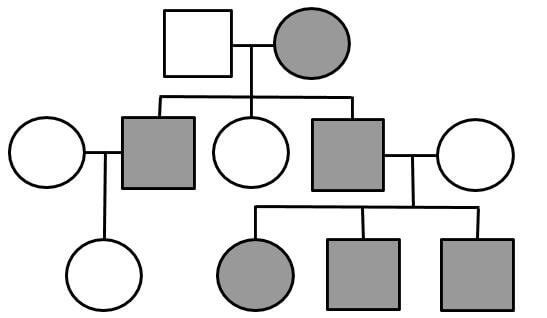 This Worksheet Gives Students A Chance To Practice Identifying Genotypes On Pedigree Charts The Pedigrees Focus On H Pedigree Chart Biology Resources Genetics