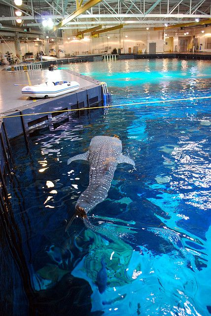 Take a Behind the Scenes Tour and experience the world's largest aquarium in a whole new way!