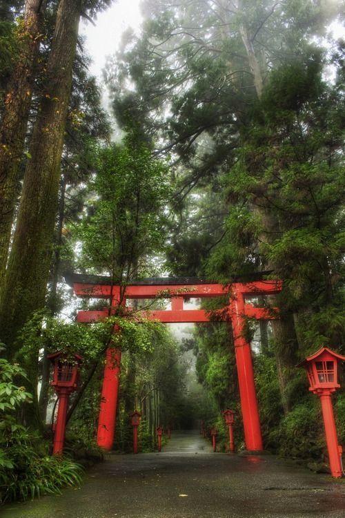 El Bosque Lluvioso En Hakone Japon Fotografia Por Planificacion De Jardin Rainy Forest Hakone Japanese Temple