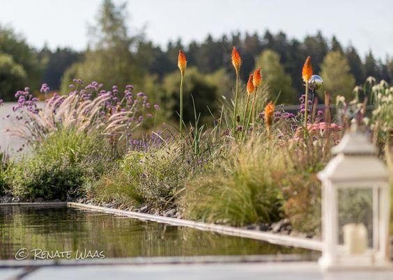Kniphofia #Stipa tenuissima #Gräser #moderner Garten #Wasserbecken - moderner garten mit grasern