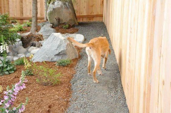 Pin Pet Dogs For Adoption In Mumbai View Dog Backyard Dog Friendly Backyard Diy Dog Fence