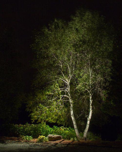 Lux Reflexion En 2020 Jardin De Nuit Eclairage De Jardin Lumieres Dans Les Arbres