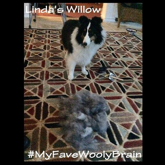 And thank you, Linda, for your entry photo of the lovely Willow. #myfavewoolybrain