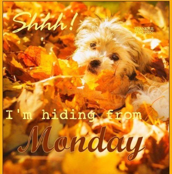 Monday- Fall~