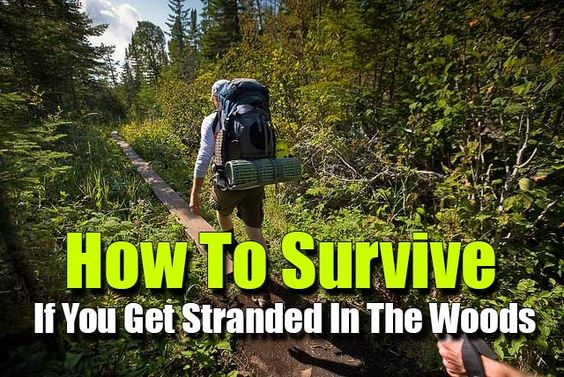 Shtf Emergency Preparedness: How To Survive If You Get Stranded In The Woods