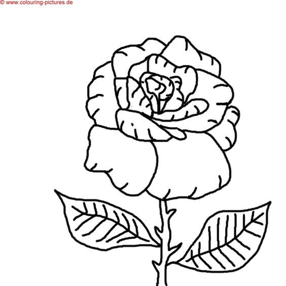 Malbilder zum Ausdrucken   flower coloring   Pinterest