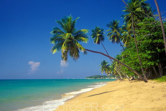 Sandy beach with palm trees, blue sky and turquoise water.