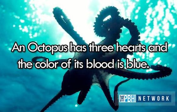 Amazing Ocean Animal Facts -  An Octopus has three hearts and the color of it's blood is blue