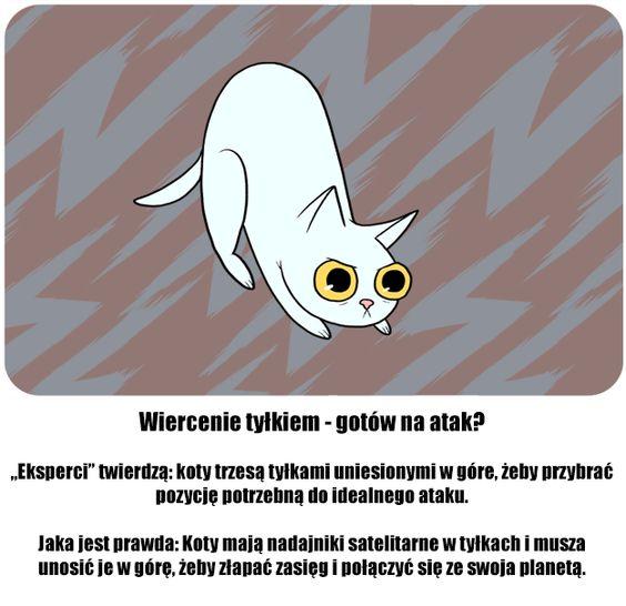Co oznaczają zachowania twojego kota? fakty i mity!