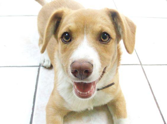 my cute dog :) Jack Russel