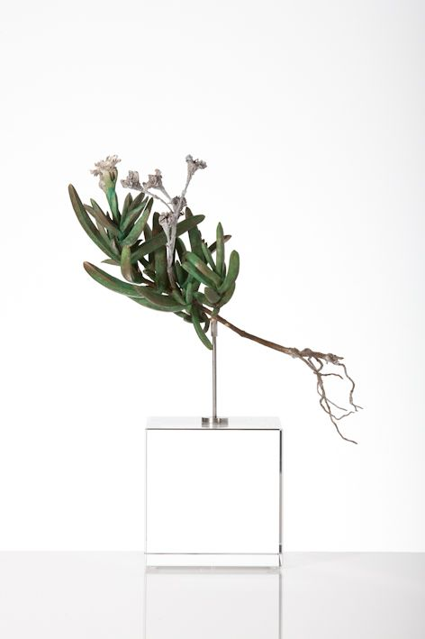 Nic Bladen / Delosperma / sterling silver & bronze / 24 cm high