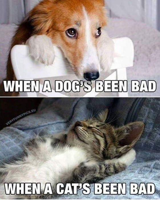 The Most Hilarious Animal Memes 26 Pics Getsokt Com Funny Dog Memes Funny Animal Memes Super Funny Quotes