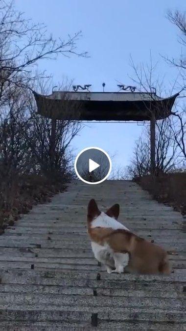 Cachorro está observando muito atento