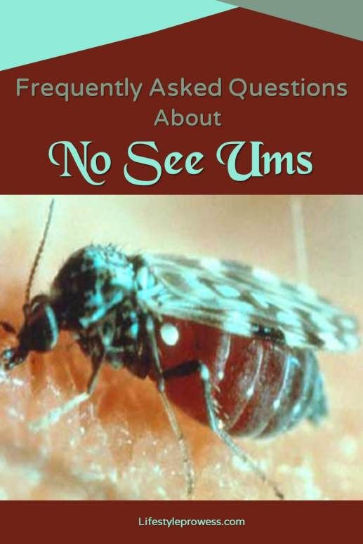 How To Get Rid Of Biting Midges In Yard