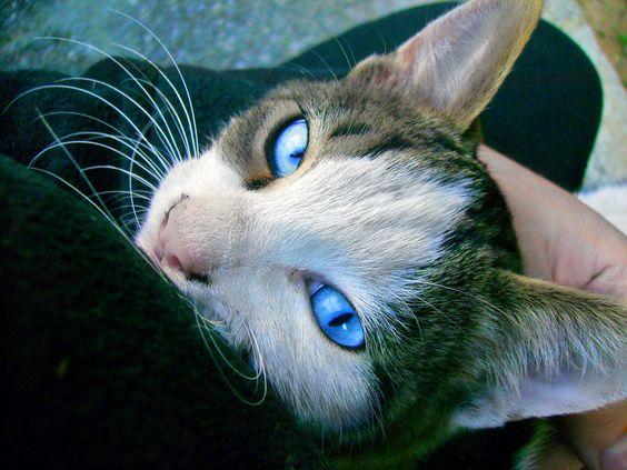 behind blue eyes by vasodelirium.deviantart.com on @deviantART