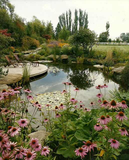 Natural Swimming Pool - Pond. Repinned by www.watersidenursery.co.uk (uk pond plant specialists)